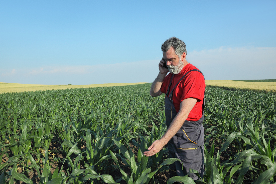 Farmer talking on mobile phone
