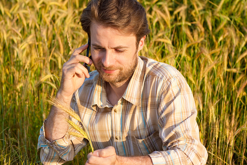 Man on phone surrounded by wheat